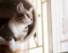 gato en rascador