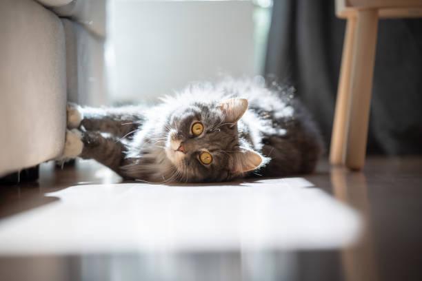 gato araña mueble