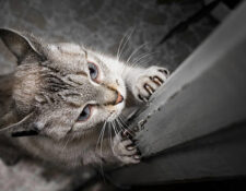 gato araña puerta