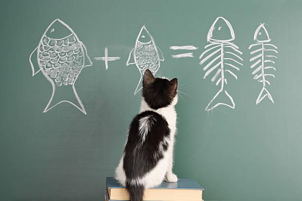 educación gatos