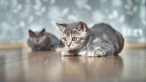 juego gatos