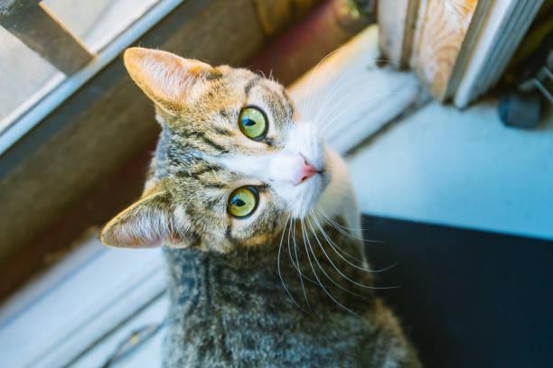 gatos percibe mundo