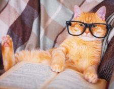 educación gato