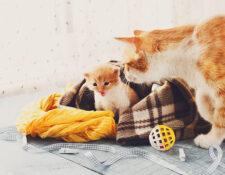 manejo gata preñada