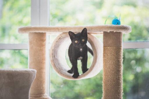 mejores rascadores gato