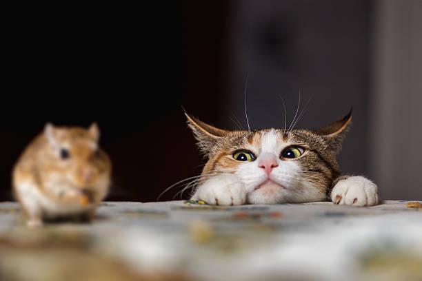 toxicos de gatos